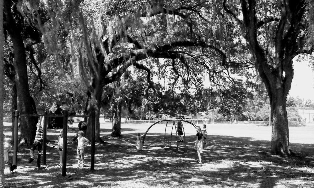 playground black and white big trees