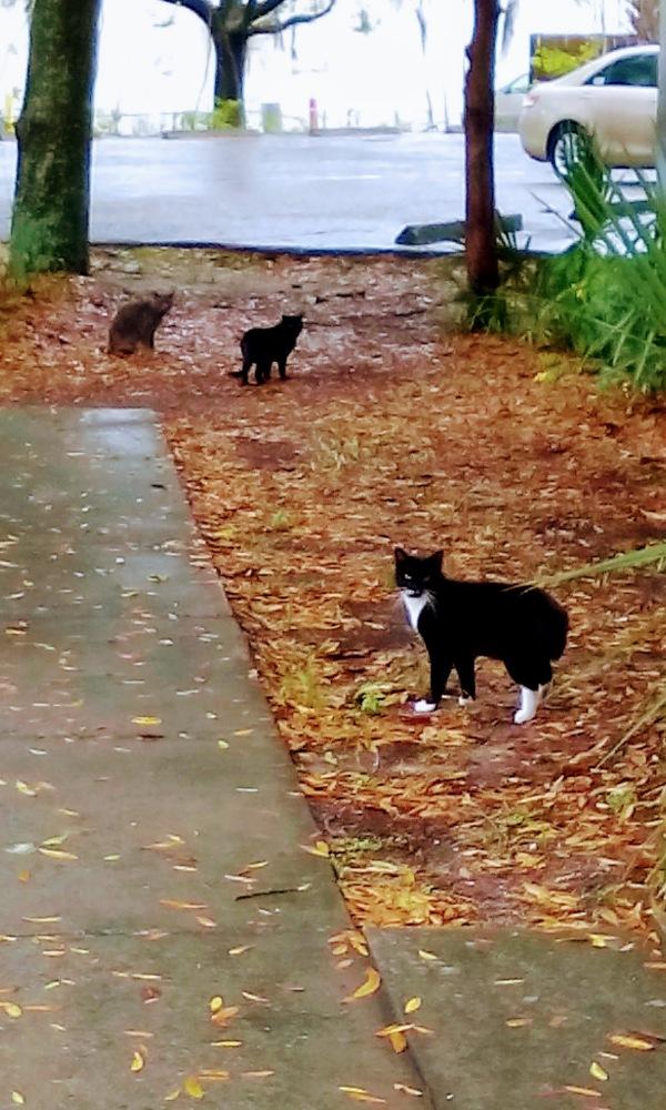 grey black cats outside