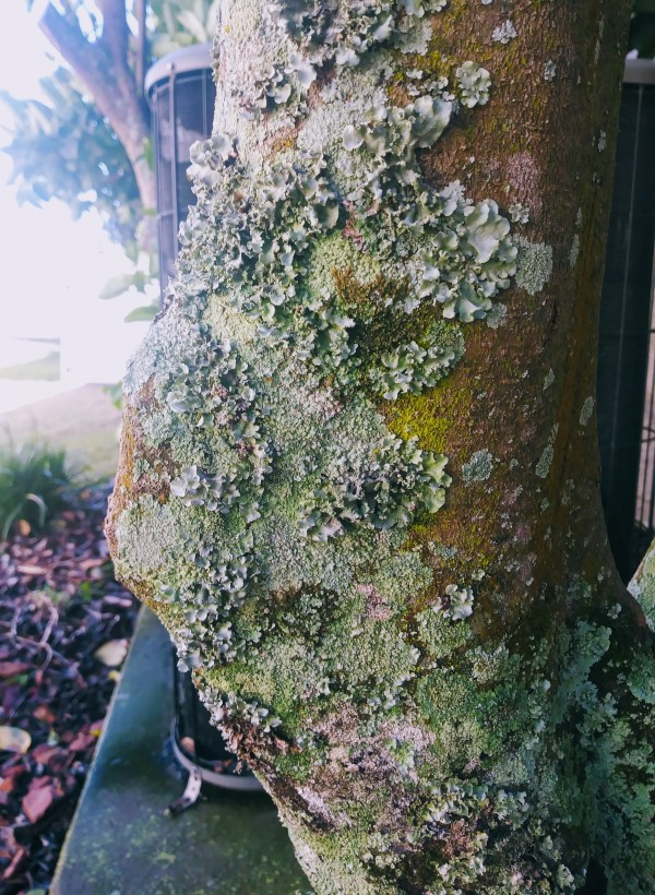 tree with lichen