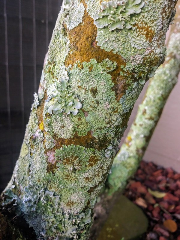 green lichen on tree trunk