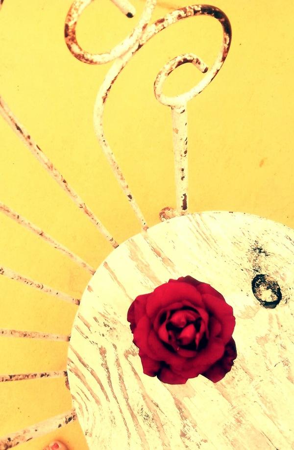 Ice Cream Parlor Rose