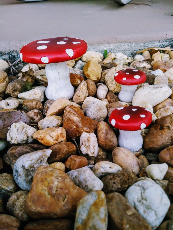Polka-Dot Mushrooms
