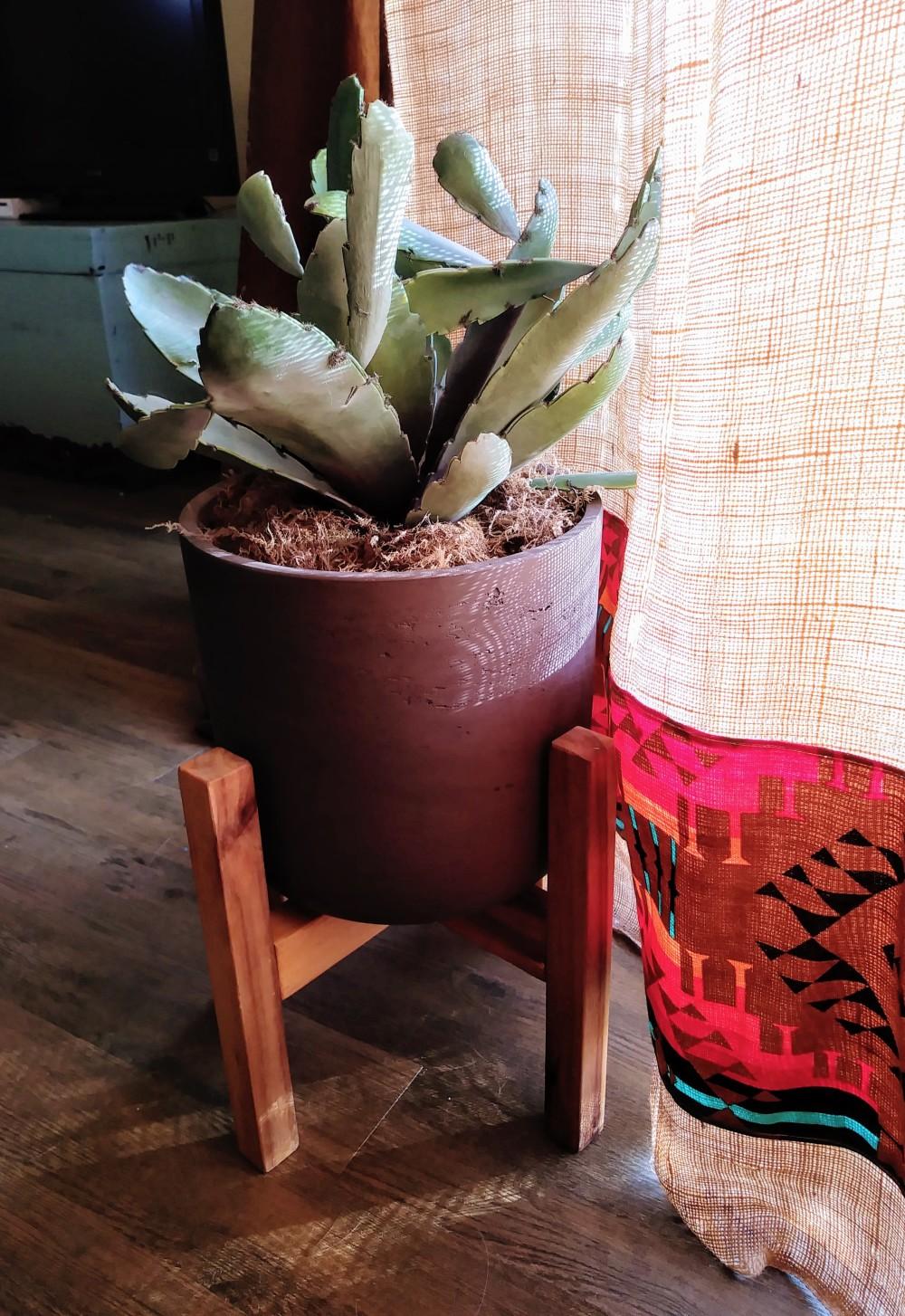 Cactus and Burlap