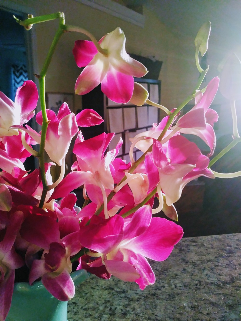 Orchids in the Evening Sun