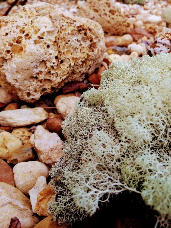 Sponge Moss