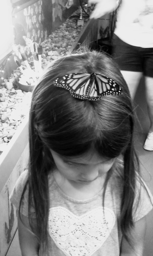Living Barrette