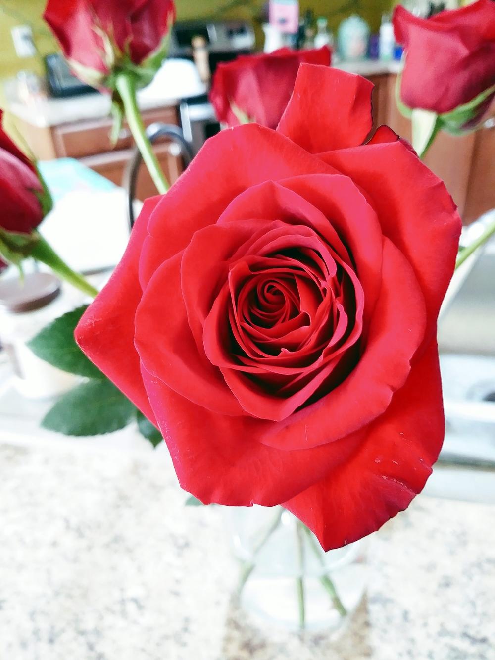 Red Rose V
