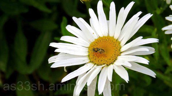 rest on flower