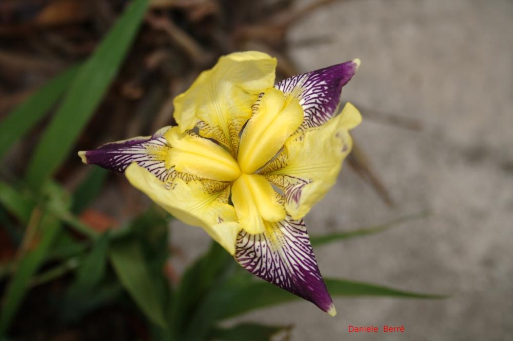 fiore di mia cognata