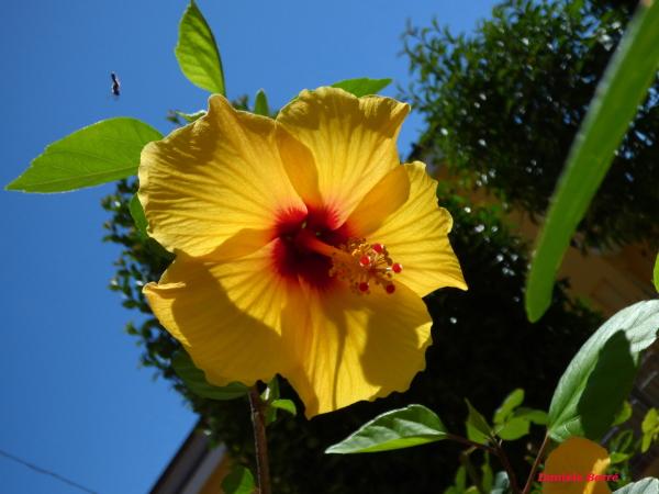 fiore con insetto