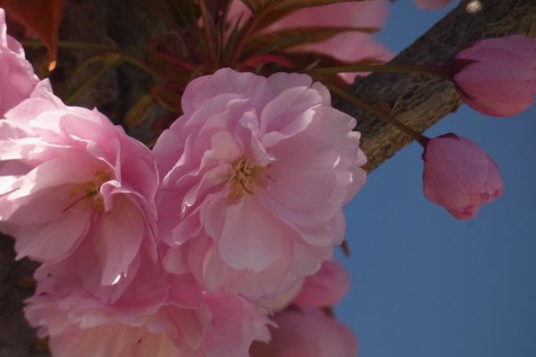 fiori d'albero