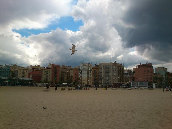 Una gavina a la platja de la Barceloneta.