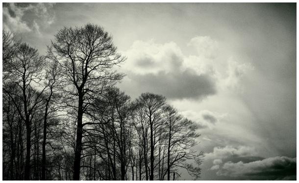 landscape [b&w]