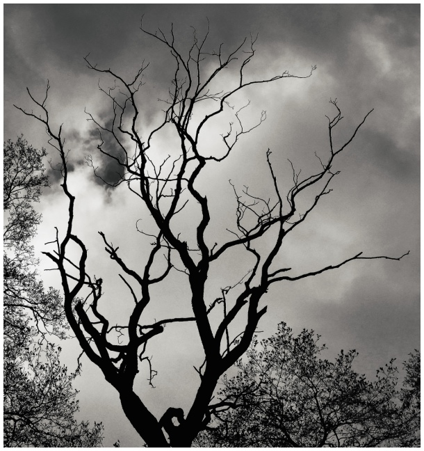 tree silhouette [b&w]