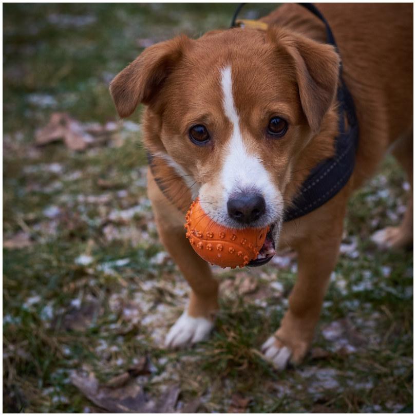 Jaga - the doggo