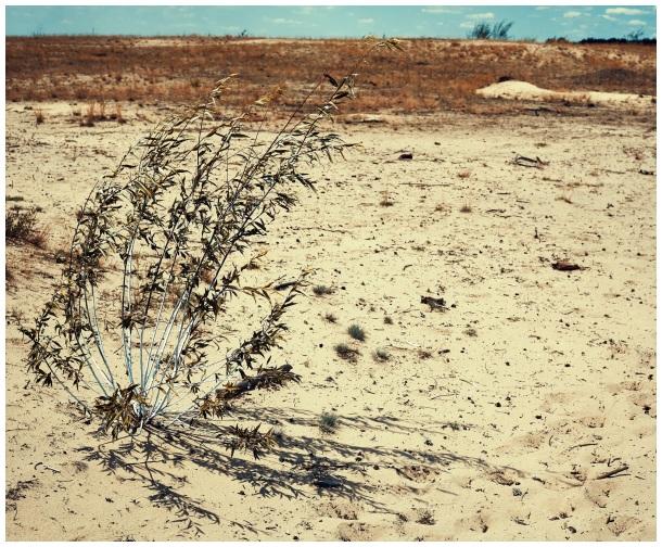 on a desert