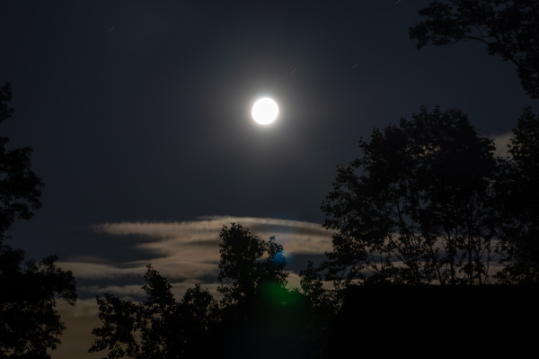 Full moon behind tree silhouettes