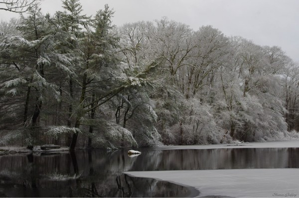 Norris Reservation. Norwell. Massachusetts.