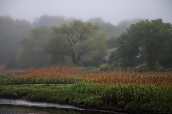Misty Morning. Cohasset, Massachusetts.