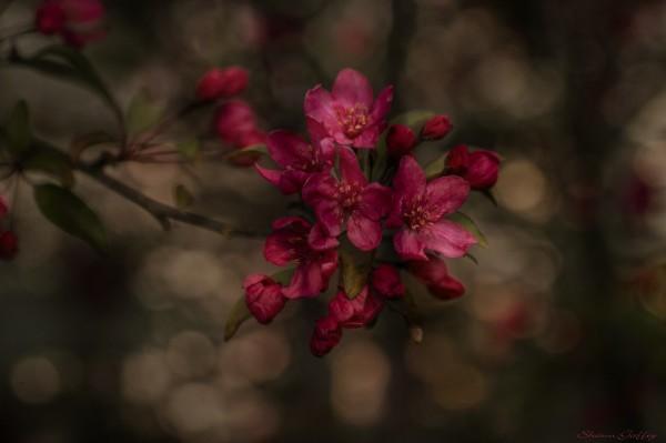 Red Blossom.