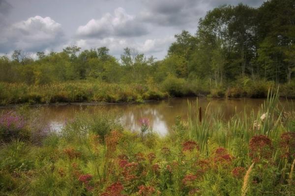 Pond. Weymouth Massachusetts.