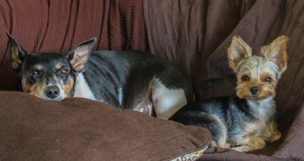 Benny & Sally enjoying their dog bed.