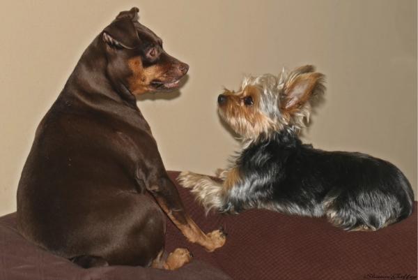Minni &  Sally
