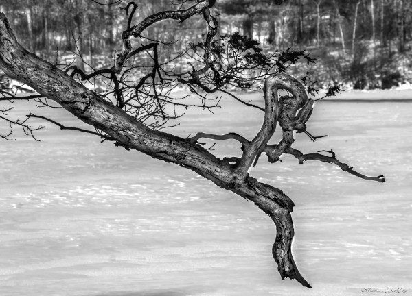 Twisted Branch.