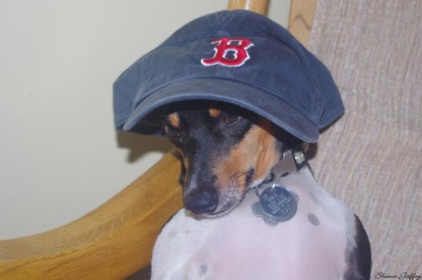 Boston Red Sox Fan.