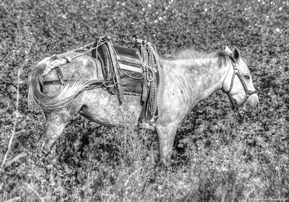Working Farm Horse. Denizli. Turkey.