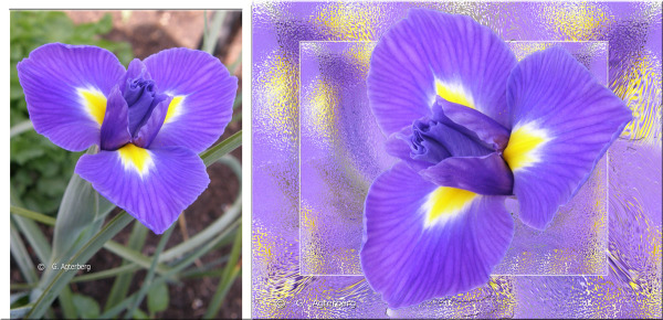 The Photo of the Iris and my adaptation of it .