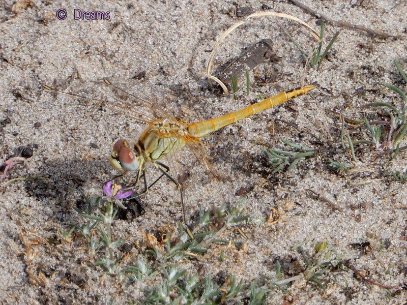 A small purple flower and a yellow dragonfly .