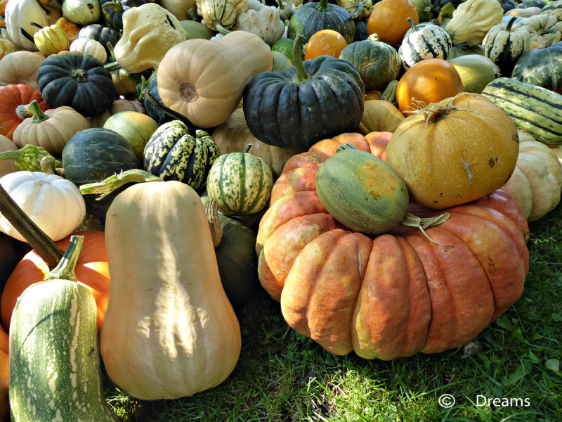 Pumpkins in all shapes and sizes
