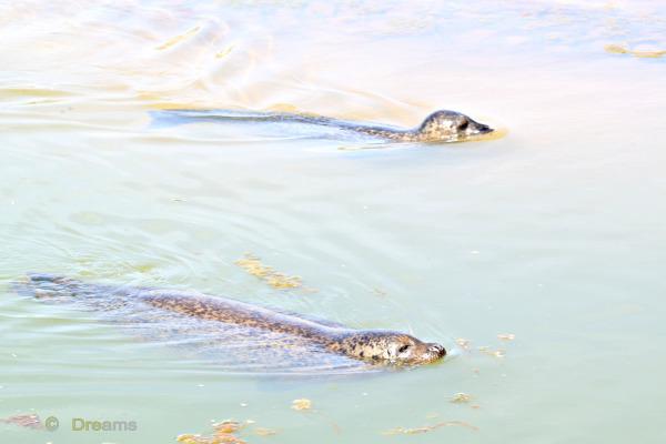 Synchronized swimming .