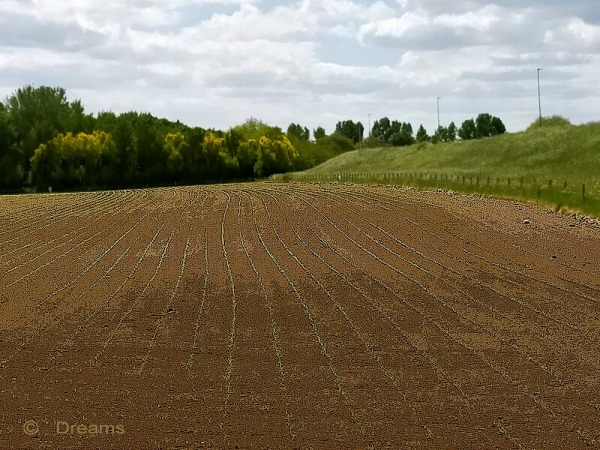 Sowing he waltzed over his land .