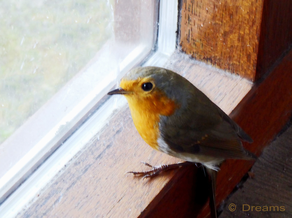 Unexpected visit from my friend Robin.