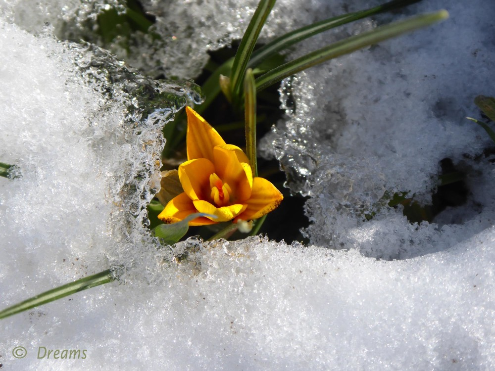 A sign of spring .