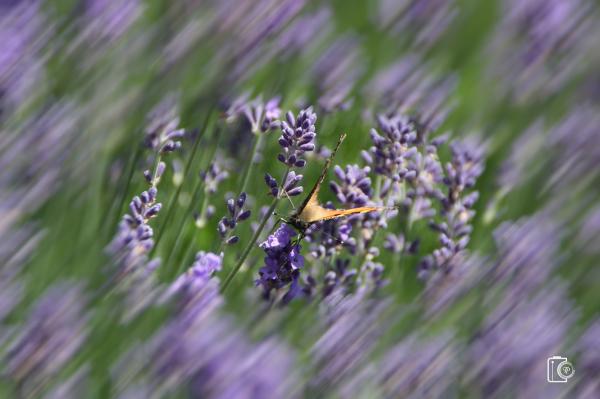 macro insecte dinant anseremme