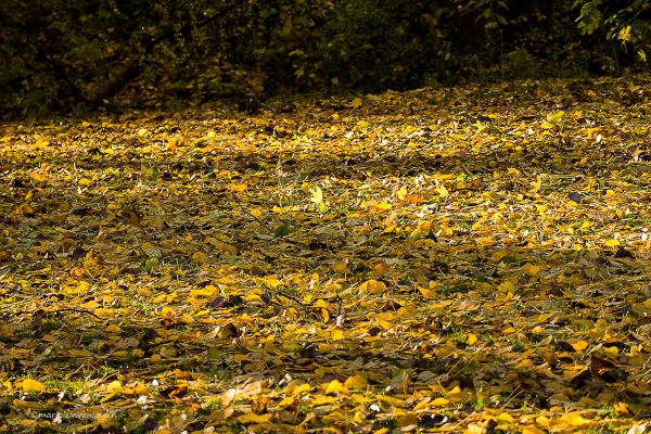 Leaves, leaves and leaves