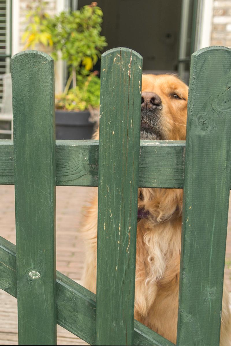 Be carefull, watch the dog