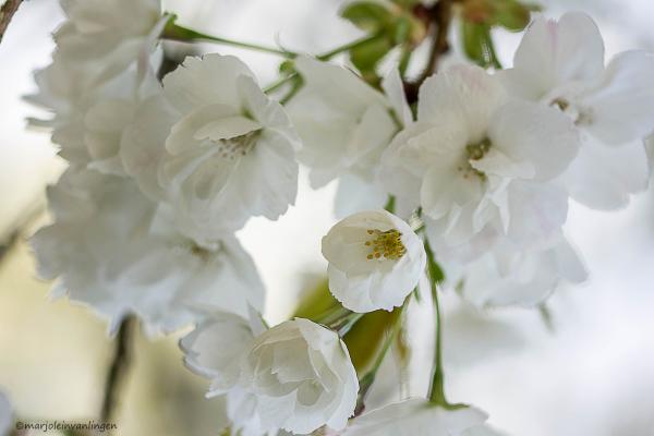 WHITE AGAIN