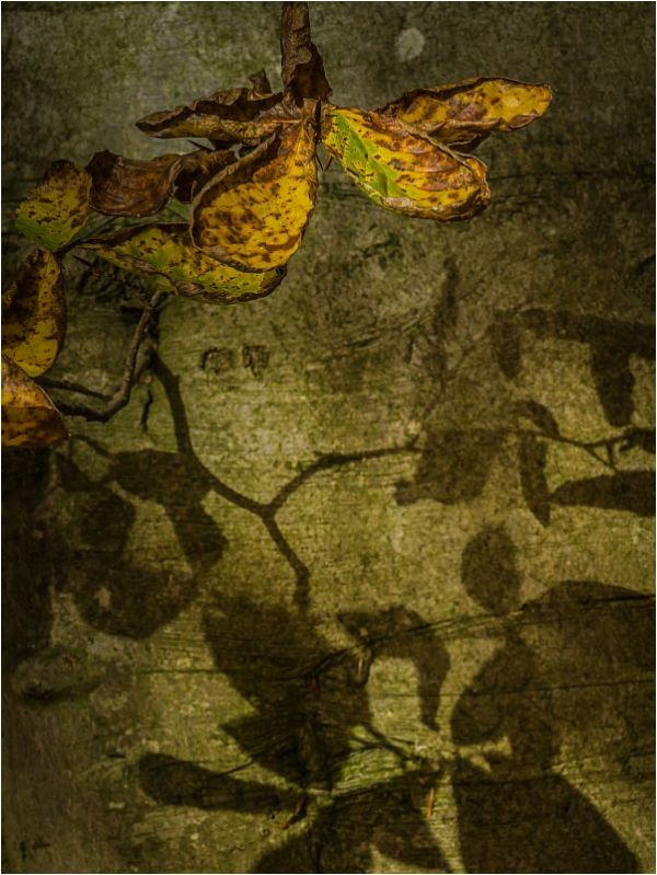 SHADOWS.OF.AUTUMN