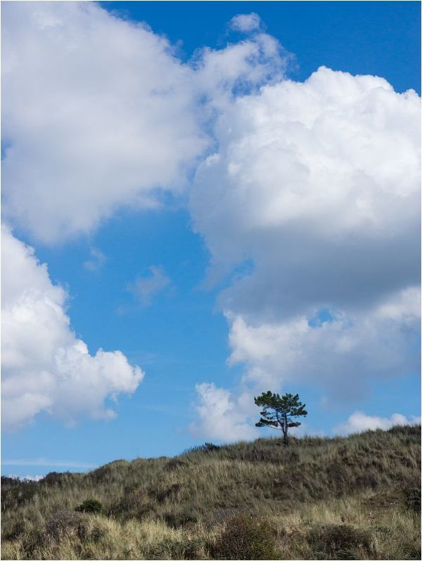THE.TREE.ON.THE.DUNE
