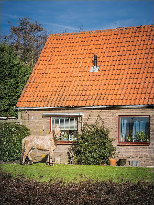 HORSE.IN.THE.FRONT.YARD