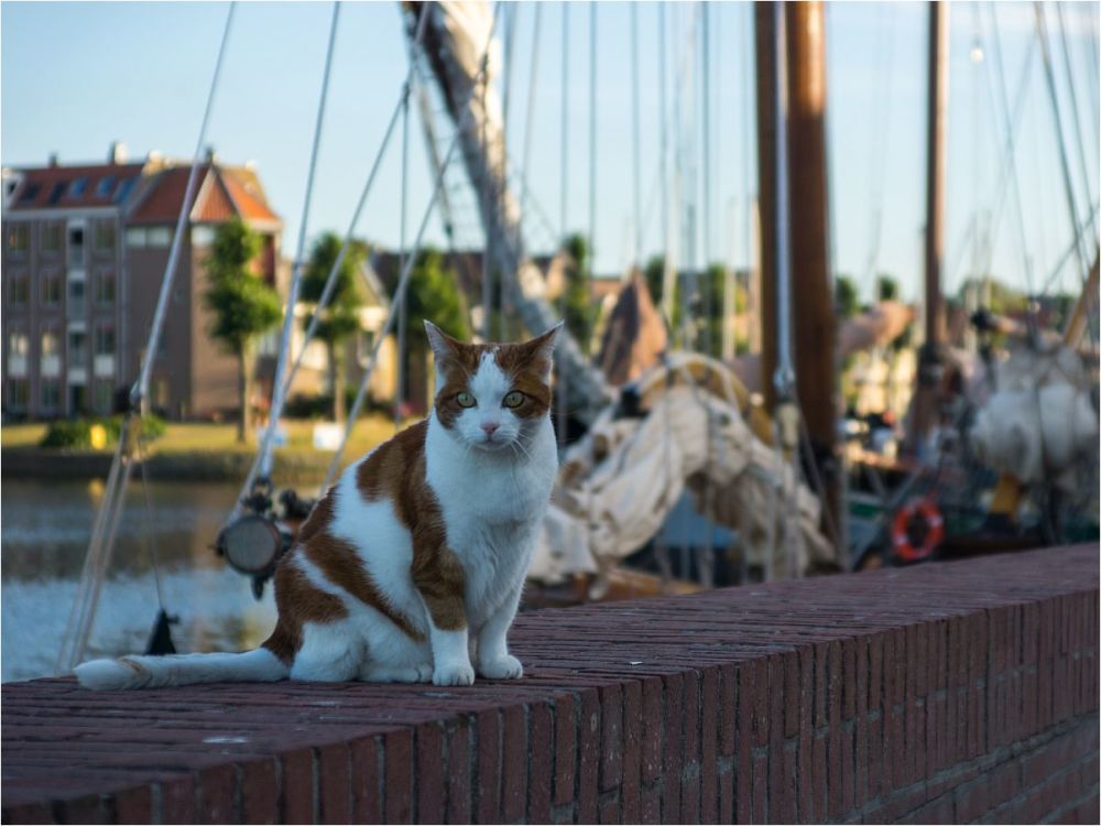 THE.HARBOUR.CAT