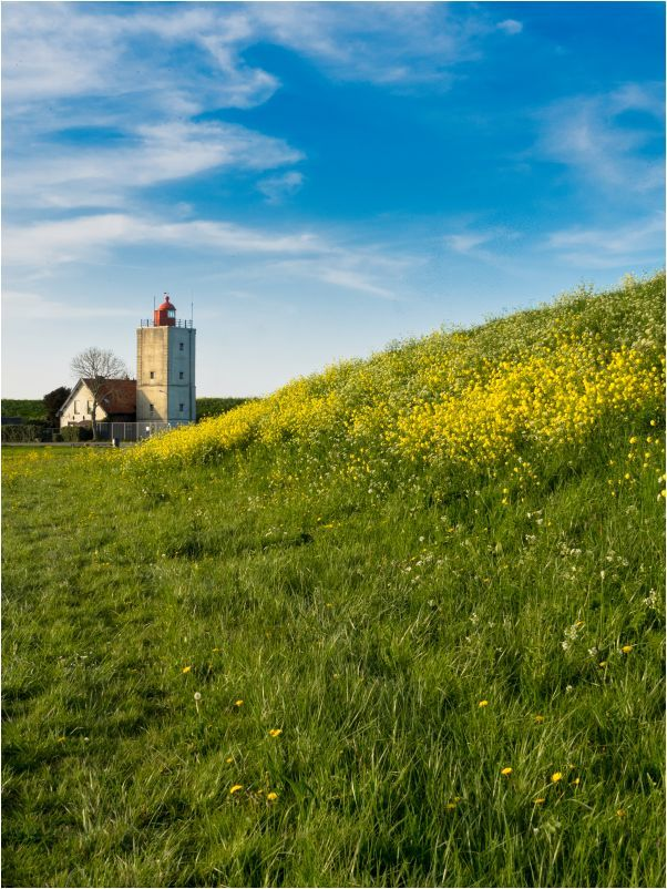 ABOUT.RAPESEED.AND.A.LIGHTHOUSE