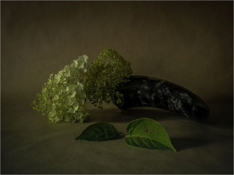 STILL.LIFE.WITH.HORN.AND.HYDRANGEA