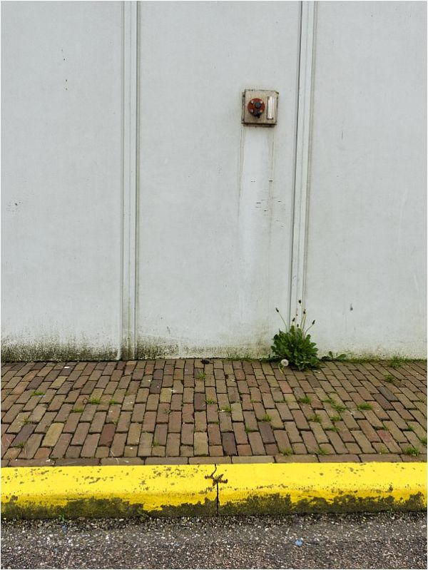 YELLOW.CURB