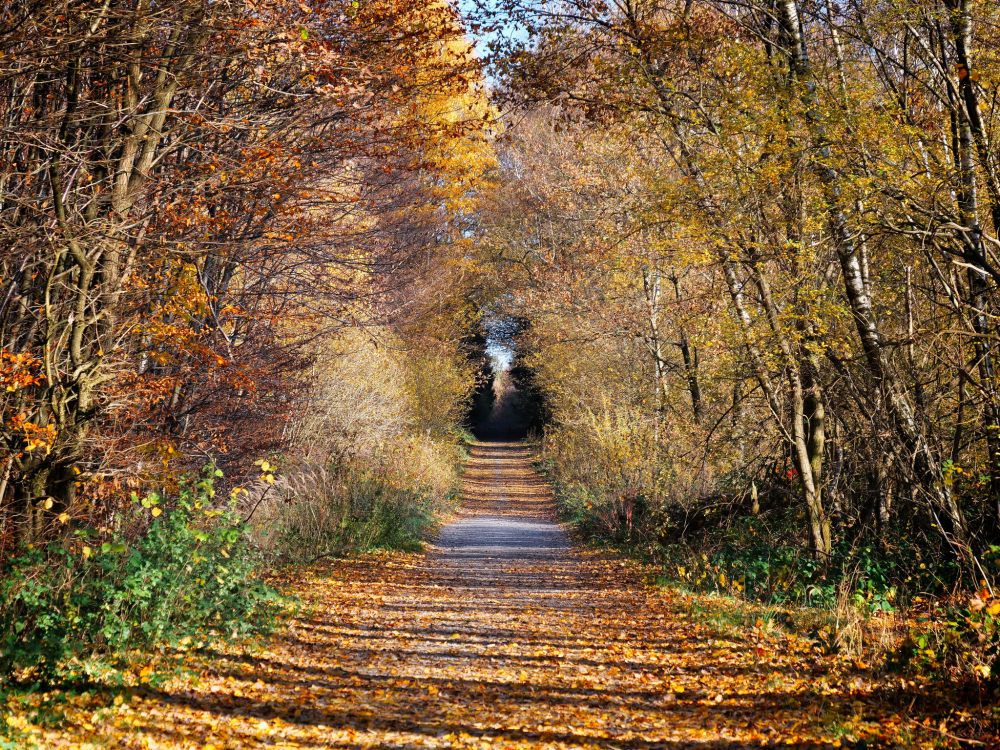 Weg aus dem Herbst