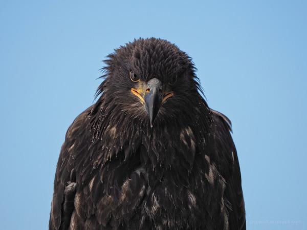 Bird facing towards looking angry